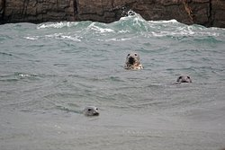 Seals near the harbour.