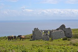 Hospital ruins and wild ponies.