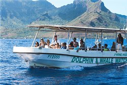 Dr. Poole's Dolphin & Whale Eco Tours