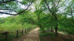筑波山景觀
