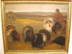 Turkey Cocks