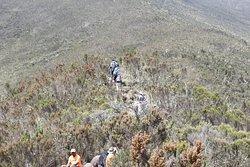 Hike Kilimanjaro with Kilimanjaro Brothers
