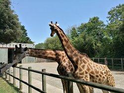 Petit zoo mais bien sympa quand même !