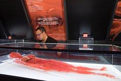 Exposición Human Bodies. Anatomia de la vida.