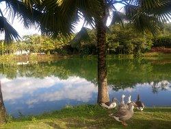Um dos lagos de Inhotim (Brumadinho/MG)
