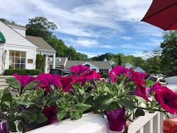 Las flores que rodean la terraza