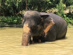 Elephant Sanctuary Kathu Phuket