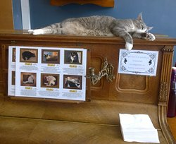 Gavroche relaxing on the piano