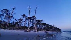 driftwood beach at sunrise