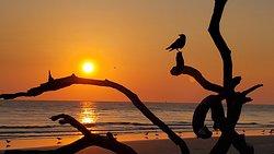 beautiful, breathtaking sunrises at driftwood beach