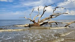 Driftwood beach is so peaceful and beautiful