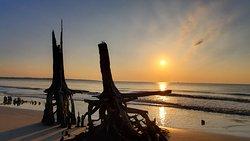 Sunrise Driftwood Beach. Stunning