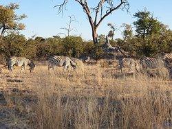 A Great Safari & Travel Experience