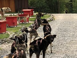 Excellent experience with Gold Rush Sled Dogs!