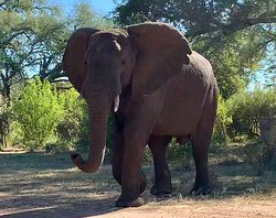 Fantastic African Safari .. memories for a lifetime