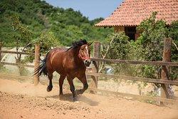 Arnaoon's Beautiful German Horse