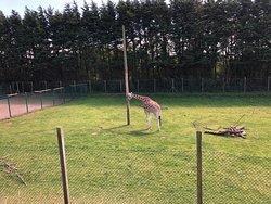 حديقة حيوانات جميلة ومتوسطة الحجم تستحق الزيارة إذا كنت في مدينة بلاكبول نظيفة فيها مطاعم ومقاهي جميله