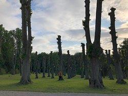 Arvores do lado do hotel, por ser um parque, tem muito verde para de tirar foto e caminhar.