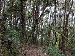 Dusky Starfrontlet Bird Reserve