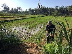 Wonderful rice field hike!
