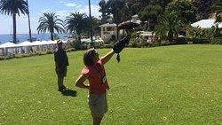 Handling one of the hawks.