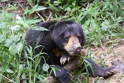 ‪Bornean Sun Bear Conservation Centre‬