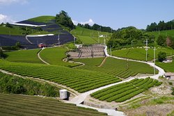 Ishitera Tea Plantation