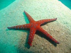 Star Fish - Sharm EL Sheikh ( Egypt )