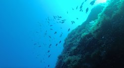 Plenty of fish to watch during the dives as well!