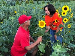 A Sunflower between sweethearts.