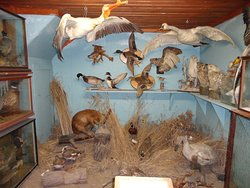 TAXIDERMIED ANIMALS.