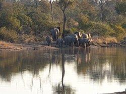 Elephants at the waterhole