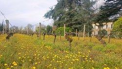 Château Cantelaube et viticulture biologique