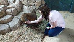 close up with the capybara