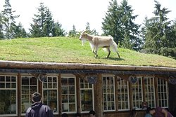 Old Country Market - Goats on Roof