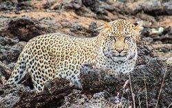 Kenya Expresso Tours and Safaris