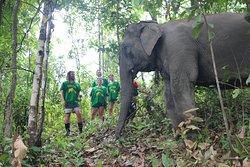 Authentic Thai Elephant Sanctuary
