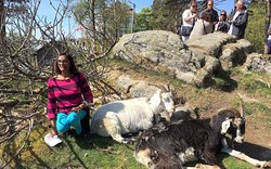 Pet Goats at top of mountain