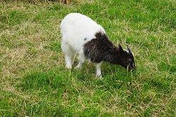 The Lake District Wildlife Park