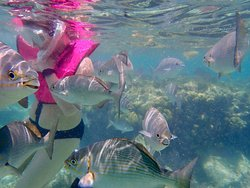 Lots of fish when snorkeling