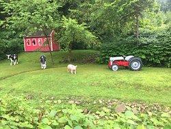 Farm Setting Across the Creek