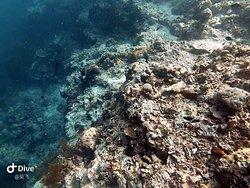 Seabed in Sipadan.