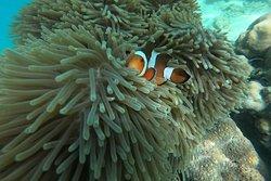 Krabi Travel The Sea