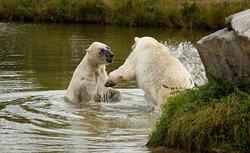 Scandinavian Wildlife Park