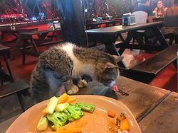 The local cat eating at Lava Lounge, Downtown La Fortuna, Costa Rica.