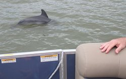 Close Encounters of the #dolphin Kind! #docjimmyscureall #marcoisland #naplesflorida #naplesfl #ecotourism #boat #boattour