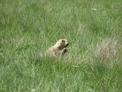 The Prairie Dog and ready to box and by having his fists up