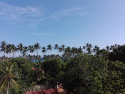 Coconut trees with sea
