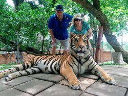 At Hua Hin safari park. I did make sure that everything was in good order, better to see tigers here, than have them killed so certain nationalities can get the body parts!!