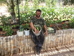 Stavros collected vegetables from thw garden